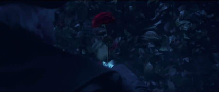 The Rose from the new film. Photo: