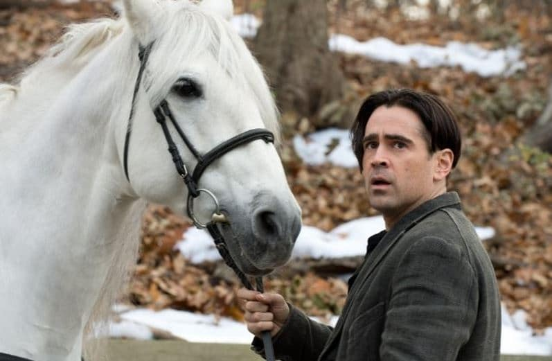 Peter and the horse
