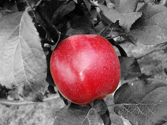 apple-495675_640