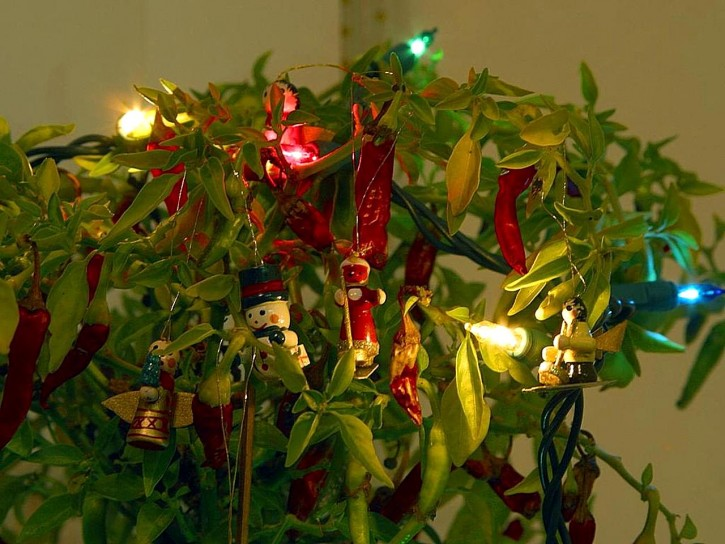 christmas-tree_w725_h544